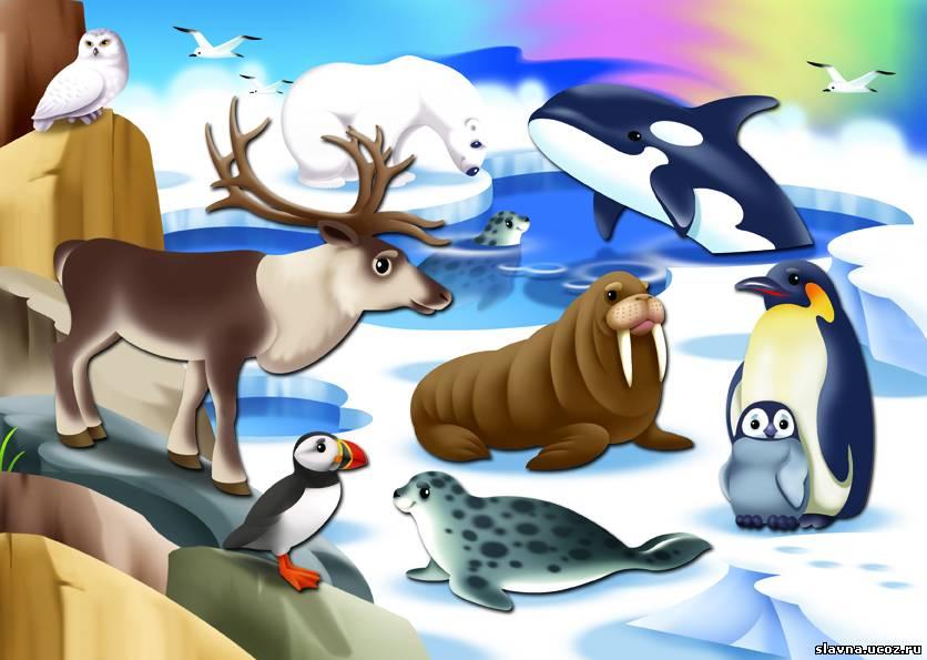 Рисунки северны животных